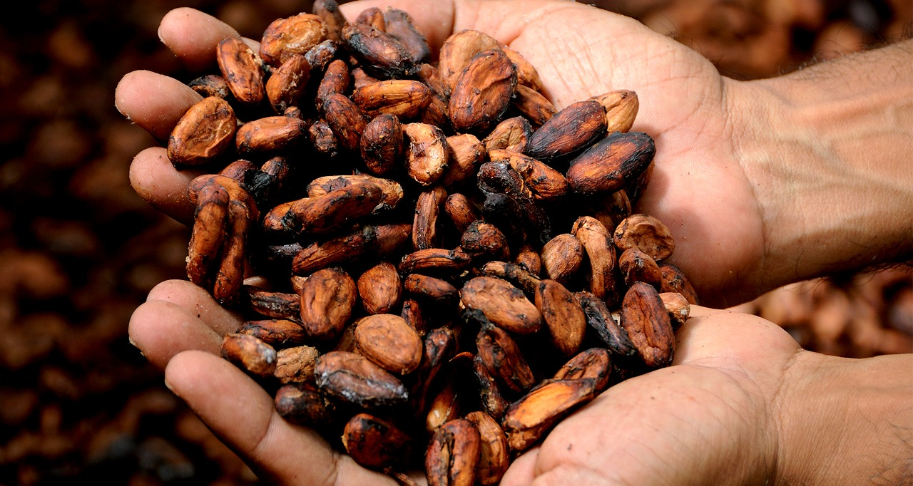 Il cacao fa bene alla salute